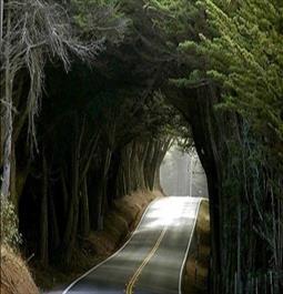 تونل جنگلی