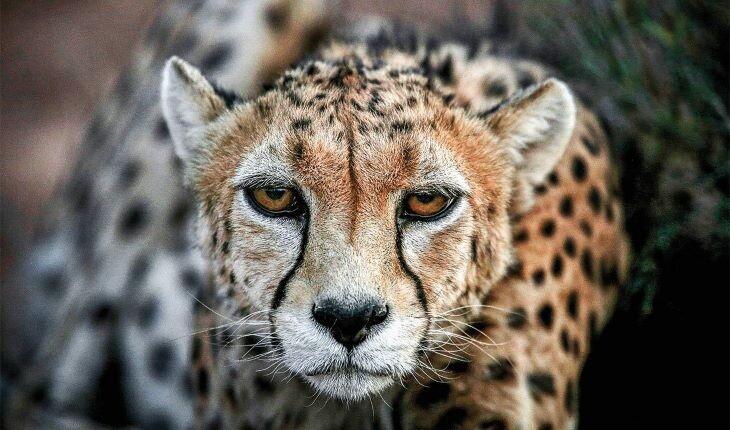 حیوانات نادر در ایران